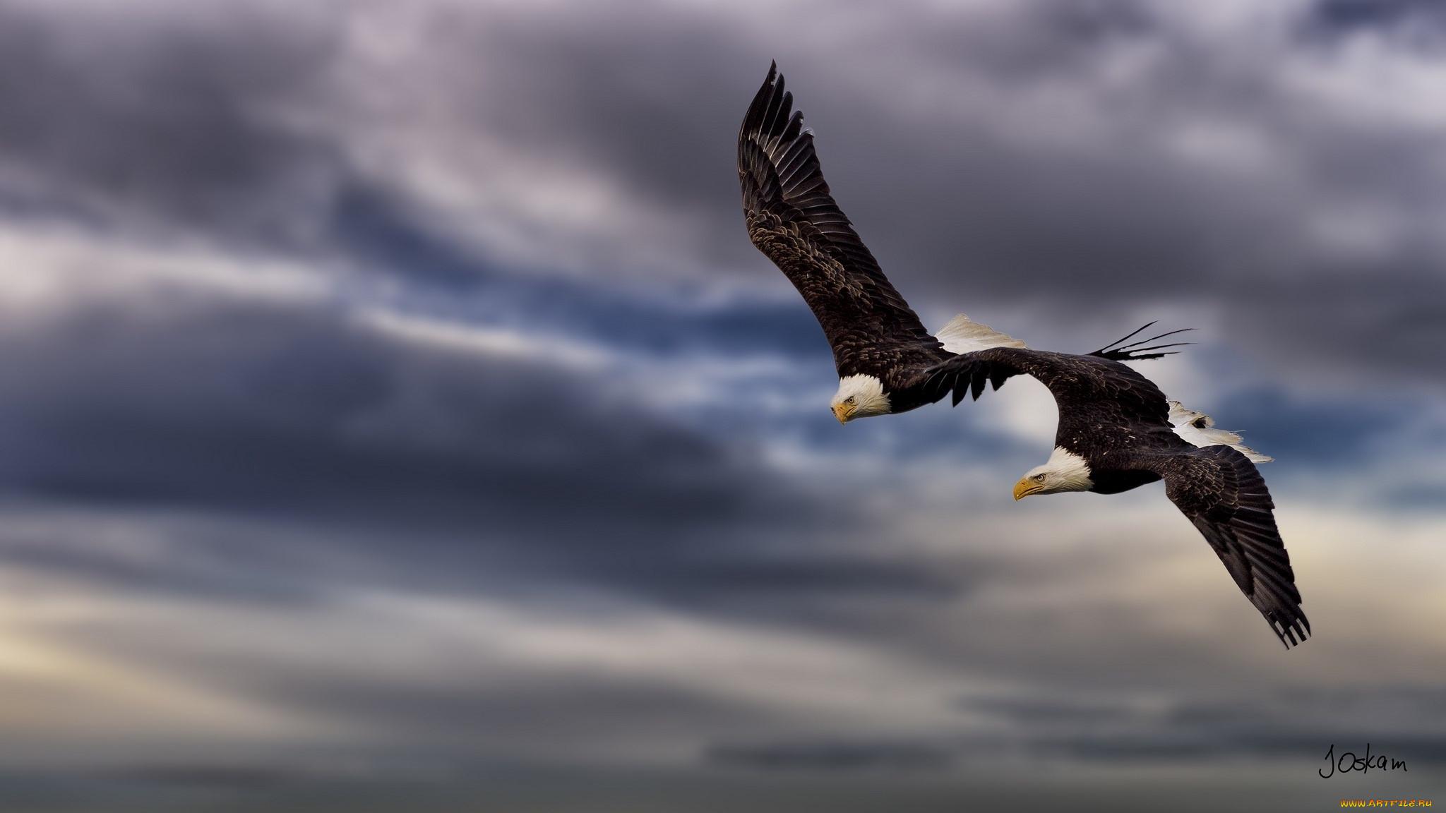проруби картинки небо с птицами парами стены также могут